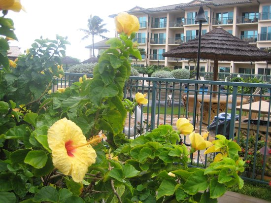 Waipouli Beach Resort: hotel flowers