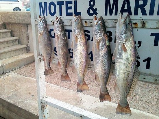 Crystal Flats Guide Service: Big one is 26 inches