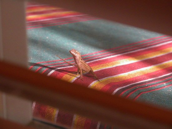 Jasmine House: view from the kitchen.....gecko