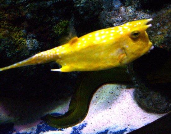 Outdoor tank picture of bristol aquarium bristol for Outdoor aquarium uk