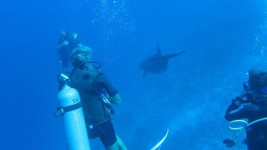 Rangiroa Plongée : dolphins