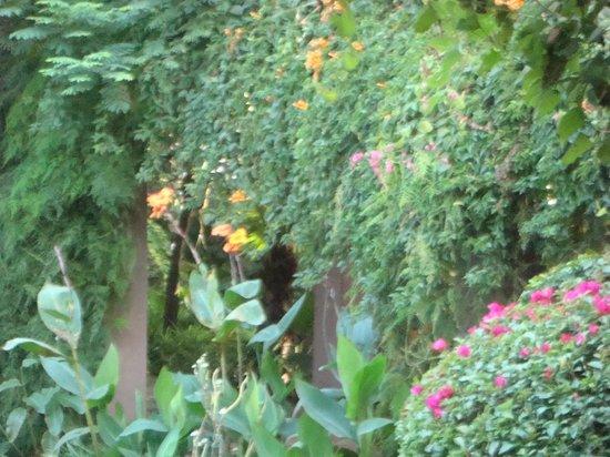 Garden at Casa Colonial