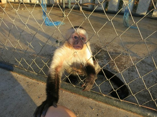 Orquidea del Sur : Poor little monkey all alone in a cage