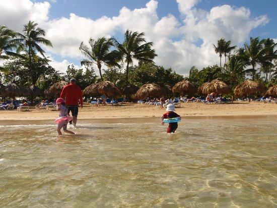 Grand Bahia Principe El Portillo: standard beach view with lines of palapas along the tree line