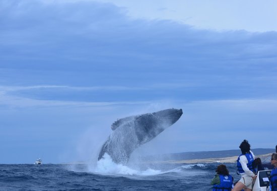 Whale Watch Cabo: Wow!!