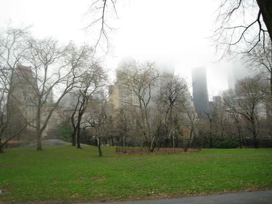 New York Carriage Company : A fog-shrouded Central Park