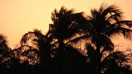 Occidental Grand Aruba All Inclusive Resort: just some trees