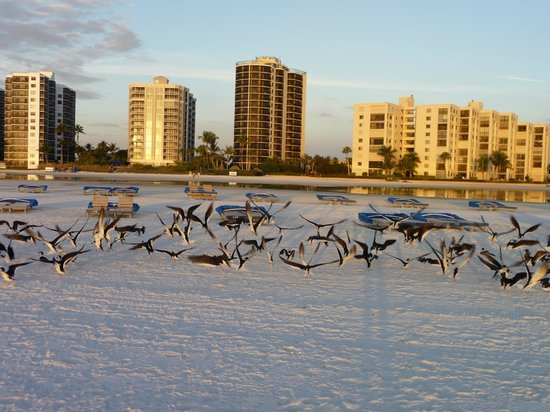 Pointe Estero Beach Resort: Birds on the beach
