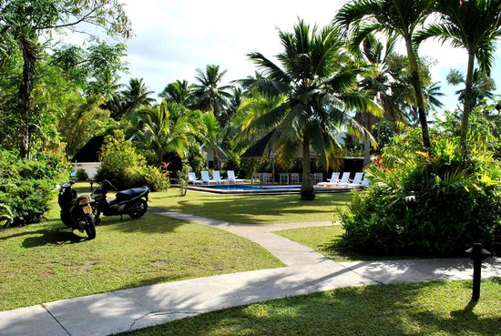 Palm Grove: View of the pool area