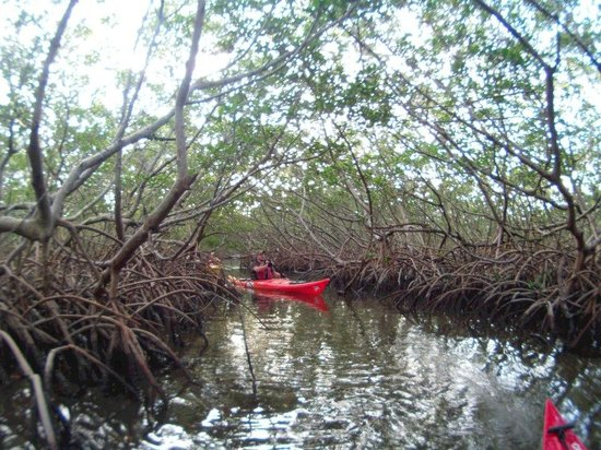 Osprey Bay Outdoors: mangrove tunnel