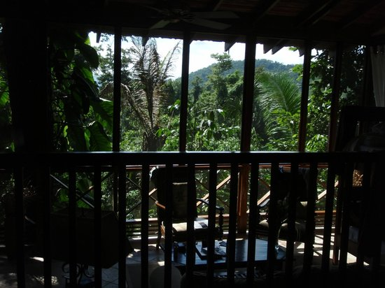 Ian Anderson's Caves Branch Jungle Lodge: the view from our treehouse
