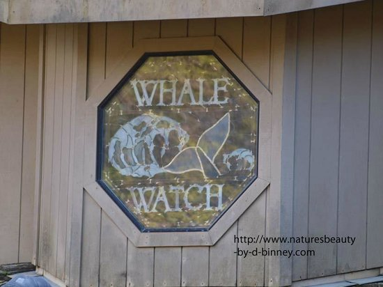 Whale Watch Inn by the Sea: window