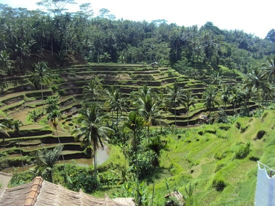 Bidadari Private Villas & Retreat - Ubud: Bike-Tour....