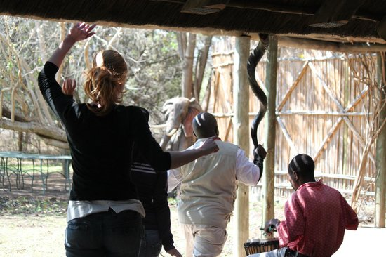 Tanda Tula Safari Camp: dancing around table before lunch(with staff).