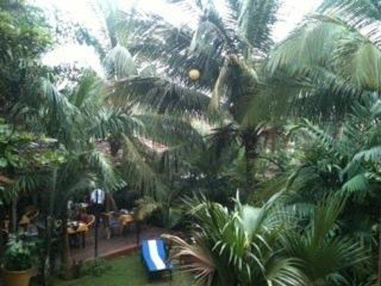 Bougainvillea Guest House Goa: Garden