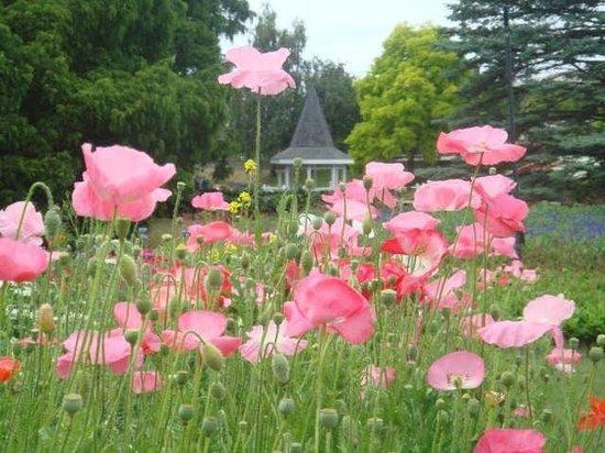 Taman Pollard: Enjoying the colour