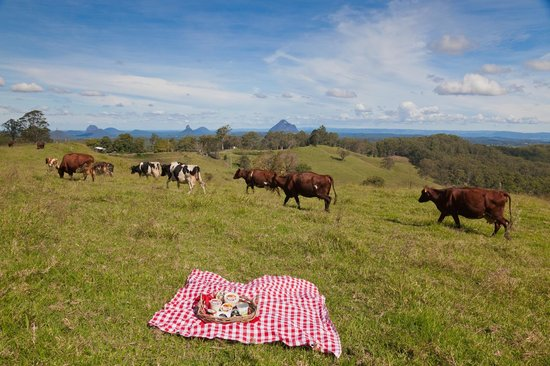 Maleny Cheese: happy cows of the Maleny plateau area enjoy wonderful lifestyle and views