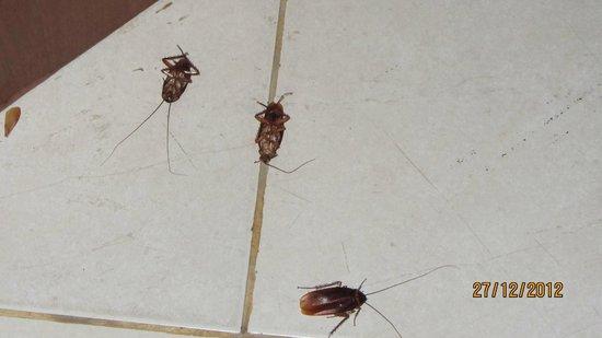 Chanisara Guesthouse: Bare nogle få af de mange karkelakker der var på vores værelse