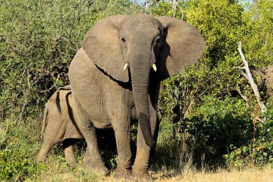 Naledi Game Lodges: Game Drive