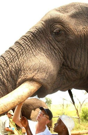 Thanda Safari Lodge: ever touched an elephant's tongue?