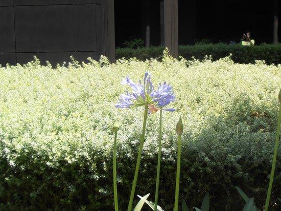 The Met Hotel: Κήπος στο ξενοδοχείο