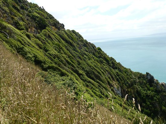Nugget Point/Tokata Walks: Amazing vegetation, weather beaten.