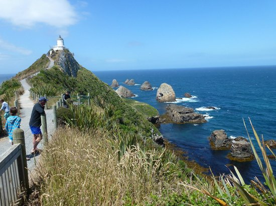 Nugget Point/Tokata Walks: Approaching the lighthouse, view the birdlife.