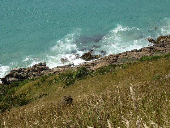 Nugget Point: The seals frollick in the rocky pools.