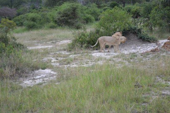 Londolozi Private Game Reserve: Animals