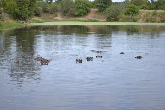 Londolozi Private Game Reserve: Hippos