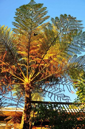 Protea Guest House: A fern in the garden