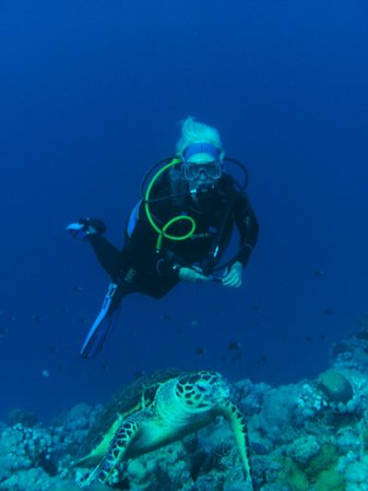 Nude branch picture of mr frogman dive center aqaba for Aqaba dive