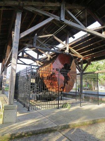 Northwest Railway Museum: giant tree as exhibit- looking at rings it must be >100 years