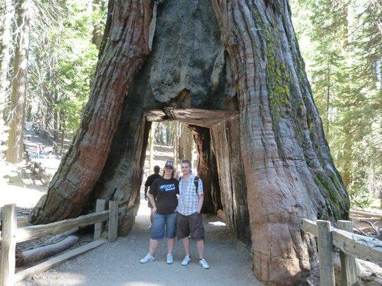 Hotel Sequoia National Park California