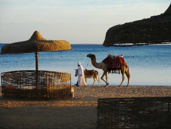 Palm Royale Soma Bay: On the beach