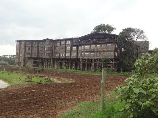 Treetops Lodge: Treetops