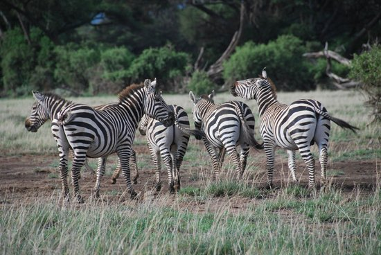 Thomas Tours & Safaris - Private Day Tours: zebre