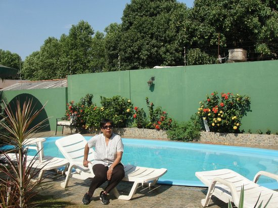 Green House Hostel: The pool and greenery