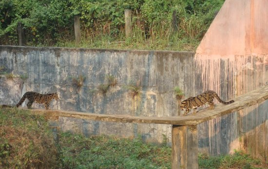 Sipahijala Wildlife Sanctuary