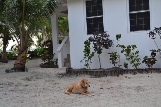 Cocotal Inn & Cabanas: Mara the resort dog who claimed us as family