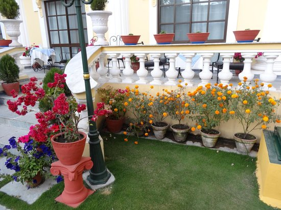 Kathmandu Guest House: I liked these flowers in the garden