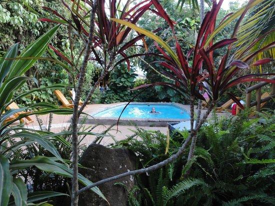 Hotel Manavai : A piscina é pequena, mas super limpa. Ao redor, um jardim agradável