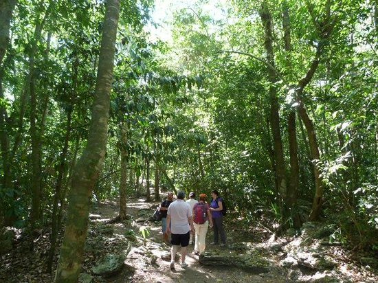Manzano's Expeditions : Touring the Tulum Jungle