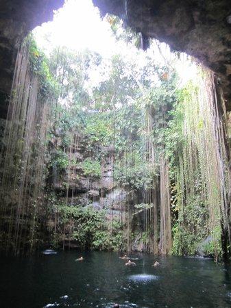 Cenote Ikil: Heavenly!!!!