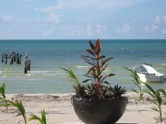 Holbox Dream Beach Front Hotel by Xperience Hotels: Bird watching - Pelicans, sea gulls and flamingos.