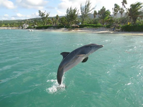 Half Moon: The dolphins did tricks and jumps during our 'dolphin encounter!' This is at Dolphin Lagoon