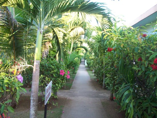 Hidden Paradise Resort Hotel: Love the pathway in Hidden Paradise