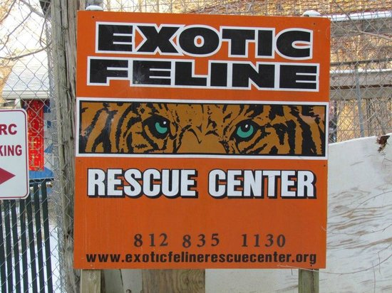 web address picture of exotic feline rescue center centerpoint