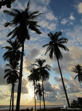 Casa de La Sirena: Sky through the palms