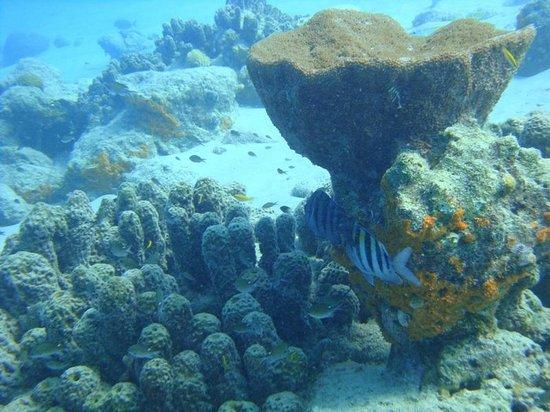 Bellafonte Luxury Oceanfront Hotel: Bari Reef. Underwater photo.
